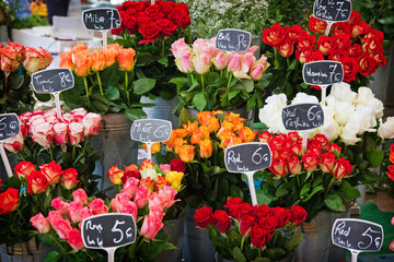 beautiful roses for sale