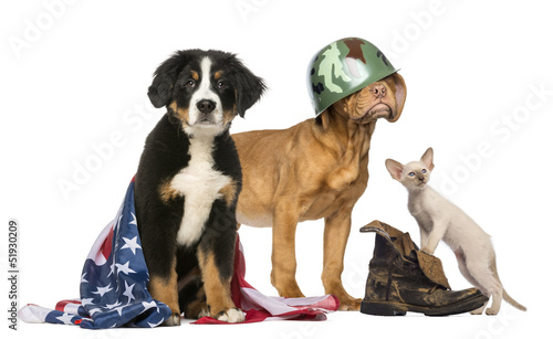Group of Patriotic dogs and cat