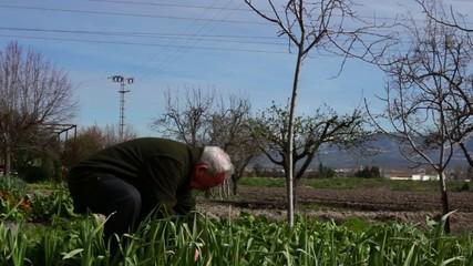 Agricultor trabajando