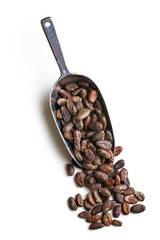 cocoa beans in scoop