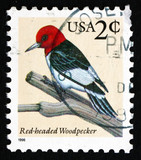 Postage stamp USA 1996 Red-headed Woodpecker, Bird