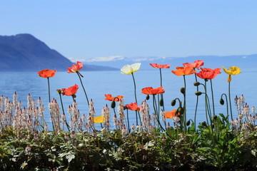 Springtime at Geneva lake, Montreux, Switzerland
