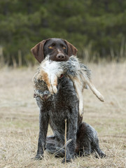 HuntingDog with a Rabbit