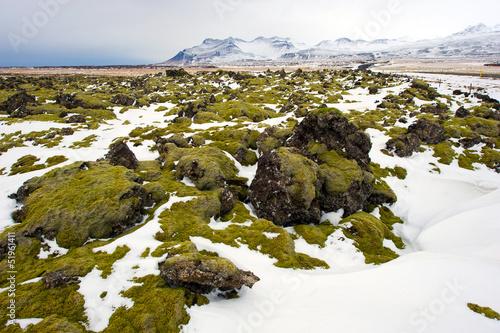 Fotobehang Antarctica 2 Moss on rocks