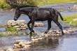 Caballo cruzando un  río