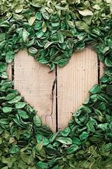 nature leafage