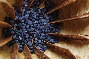 detail of poppy seeds (food ingredient)