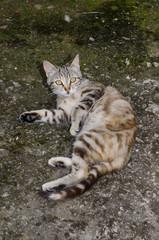 gatta che si rotola