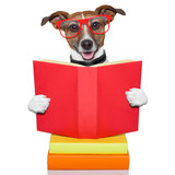 Fototapety school learing dog