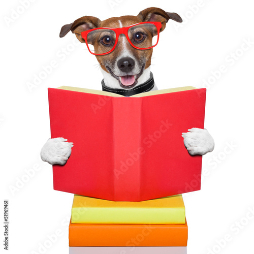 school learing dog