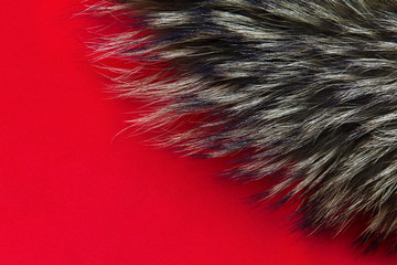 Background of fur.