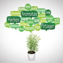 nuage de mots bulles et pot : aromates
