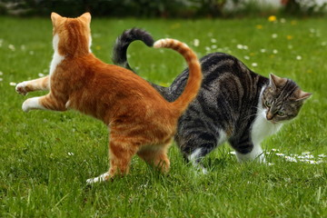 Katzenherz