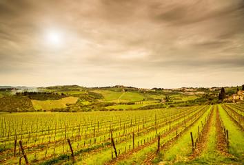 Chianti region, Panzano vineyard, trees and farm on sunset. Tusc
