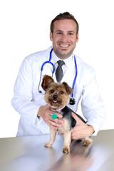 Young veterinarian examining a dog