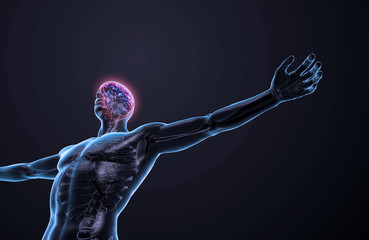 Human anatomy - central nervous system