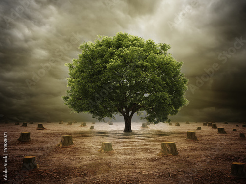 Lonely tree in a deforested landscape - 51989071
