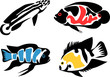 set of aquarium fishes - cichlids
