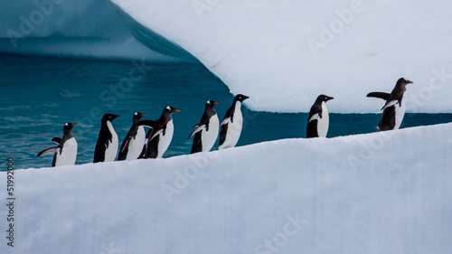 Group of eight penguins marching uphill on iceberg