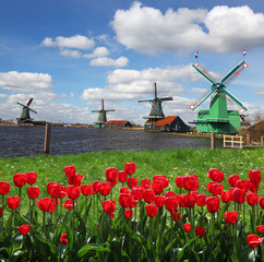 Traditional Dutch windmills with red tulips,Amsterdam, Holland
