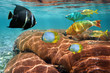 Colorful tropical fish and coral reef