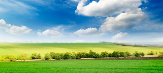 beautiful spring field
