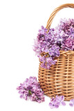 bouquet of lilac flowers in a wicker basket