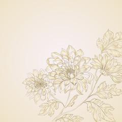 Branch of Chrysanthemum