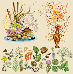 Illustration set of natural elements for dry bouquets