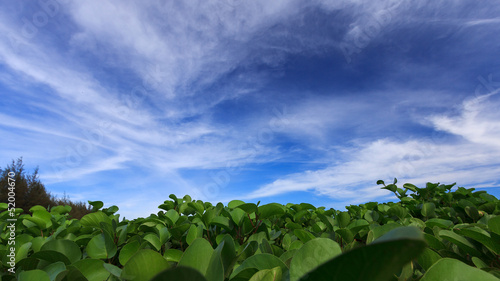 Leaf on blue sky