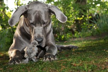 Hund und Hühnchen spielen süß