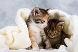 Kitten closed in towel - 52014672