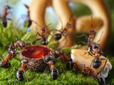 banquet in anthill with honey and cake, ant tales
