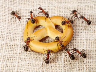 ants solving problem of cake transportation, teamwork