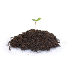 Jungpflanze – Wachstum