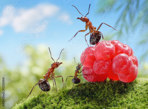 sweets are unhealthy for children!  ant tales