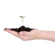 Junge Pflanze auf Hand