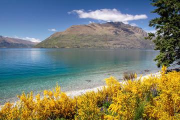 Ginster am Ufer des Lake Wakatipu