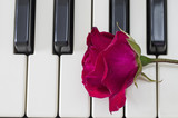 Rose over piano keys