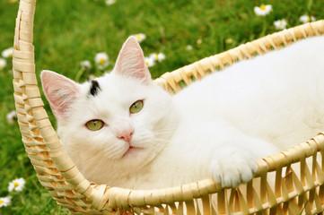 Weiße Katze im Henkelkorb