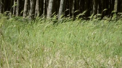 Ingresso bosco