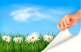 Nature background with green grass, daisies and hand. Vector
