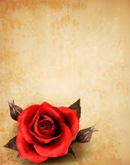 Big red rose on old paper background. Vector.