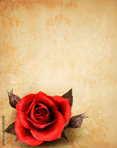 Big red rose on old paper background. Vector.