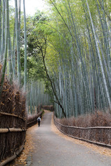 Kyoto, Japan - bamboo grove in Arashiyama