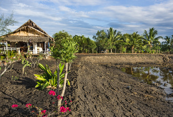 Agricultural Area - Countryside in South East Asia