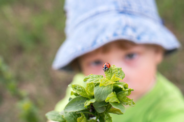 little boy look red ladybird