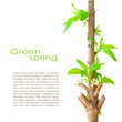 Spring card design with copyspace