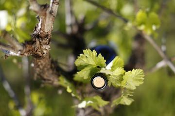 vin et vigne