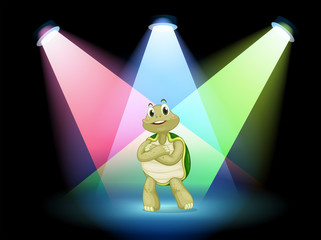 A turtle standing at the stage